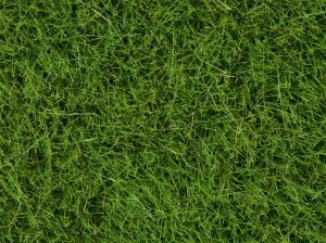 NOCH 07093 - Wild Grass Bright Green 100g (grass 6 mm)