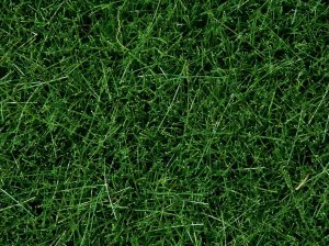 NOCH 07094 - Wild Grass Dark Green 100g (grass 6mm)