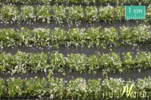 MININATUR 767-21S - Flower field strips white
